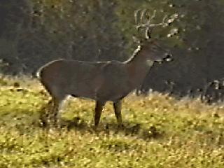 Deer Hunting USA